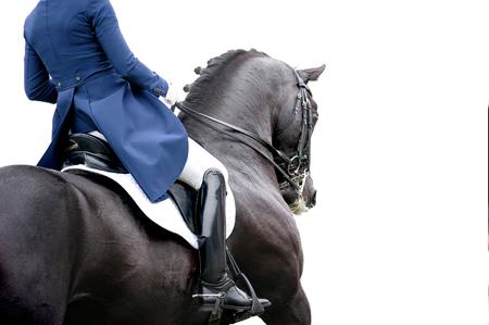 Photo pour black dressage horse detail isolated on white - image libre de droit
