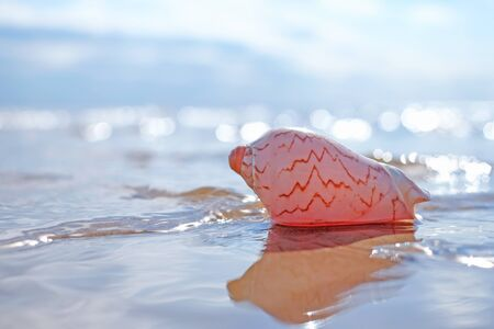 Photo for pink seashell on the sea bokeh shining background - Royalty Free Image