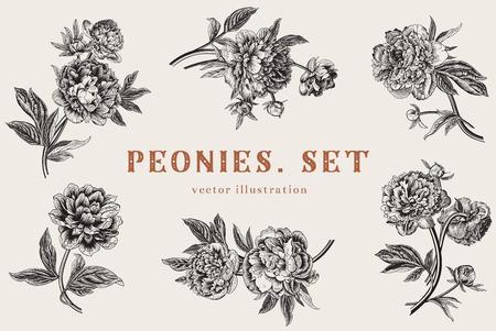 Foto de Vintage vector illustration. Peonies. Set. - Imagen libre de derechos