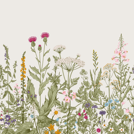 Vector seamless floral border. Herbs and wild flowers. Botanical Illustration engraving style. Colorful