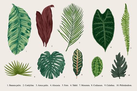 Illustration for Set Leaf. Exotics. Vintage botanical illustration. - Royalty Free Image