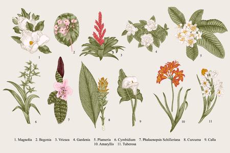 Illustration pour Exotic flowers set. Botanical vector vintage illustration. Design elements. Colorful. - image libre de droit