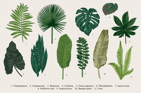 Illustration for Set Leaf. Exotics. Vintage vector botanical illustration. Colorful. - Royalty Free Image