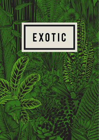 Illustration pour Vector card vintage. Exotic flowers and plants. Botanical classic illustration. - image libre de droit