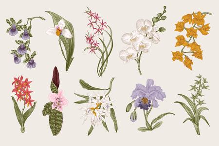 Illustration pour Exotic orchid set. Botanical vector vintage illustration. Design elements. Colorful. - image libre de droit