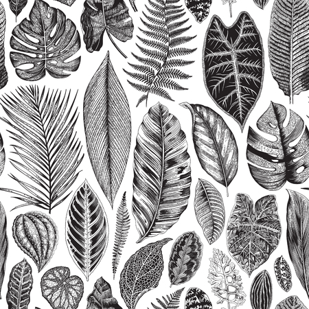 Illustration for Vector seamless vintage floral pattern. Exotic leaves. Botanical classic illustration. Black and white - Royalty Free Image