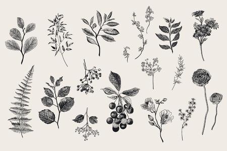 Illustration pour Leaves, flowers and berries set. Botanical vector vintage illustration. Set of florist. Colorful - image libre de droit