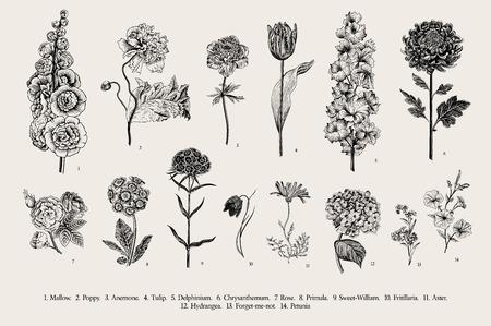 Illustration pour Big set flowers. Victorian garden flowers. Classical botanical vintage illustration. Black and white - image libre de droit