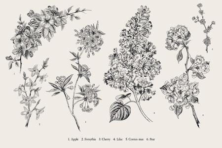 Illustration pour Blooming trees. Vintage vector botanical illustration. Spring set. Black and white - image libre de droit