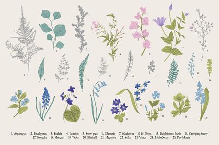 Illustration pour Spring flowers and ferns. Set. Vintage vector botanical illustration. - image libre de droit