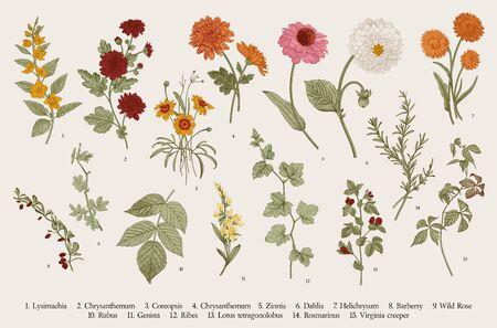 Illustration pour Vintage vector botanical illustration. Set. Autumn flowers and twigs. Colorful - image libre de droit