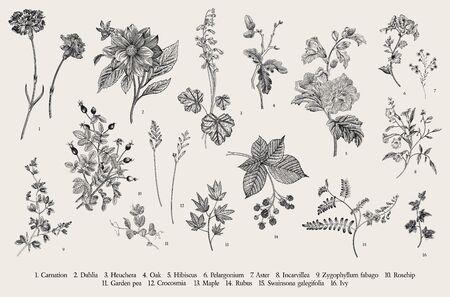 Illustration pour Vintage vector botanical illustration. Set. Autumn flowers. Black and white - image libre de droit