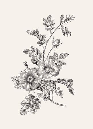 Illustration pour Rose hip. Wild rose. Botanical floral vector illustration. Black and white   - image libre de droit