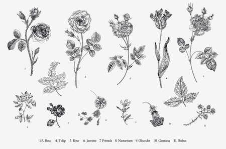 Illustration pour Flowers. Set. Botanical floral vector illustration. Black and white - image libre de droit