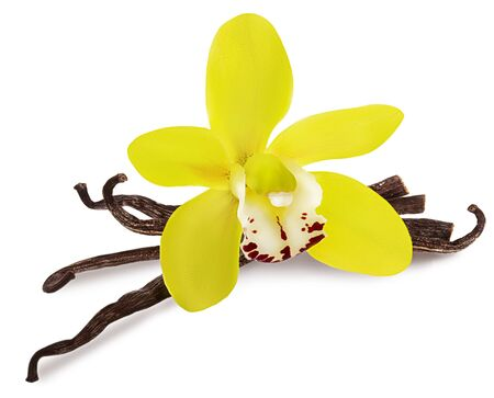 Photo for Vanilla isolated. Stick pile and yellow Orchid flower and dry beans isolated on white background as package design detail - Royalty Free Image
