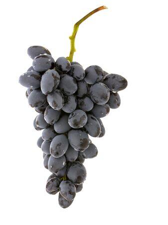 Foto für Wine grapes berries with water drops isolated on white background - Lizenzfreies Bild