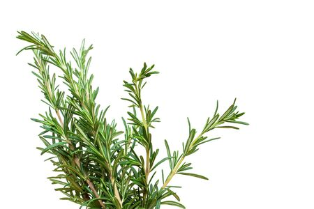 Photo for Fresh rosemary branch isolated on white background - Royalty Free Image