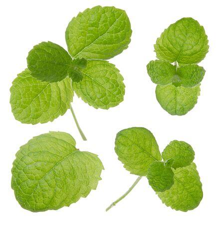 Photo pour Mint fresh green leaf set isolated on white background - image libre de droit