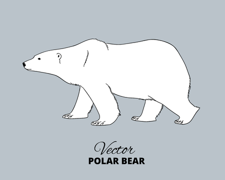 Ilustración de Polar bear hand drawn illustration. Walking or stranding polar bear, side view. Vector sketch. - Imagen libre de derechos