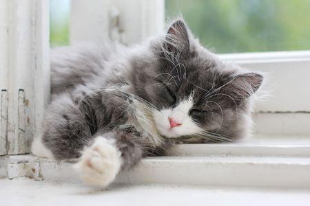 picture of sleeping kitten on window ledge