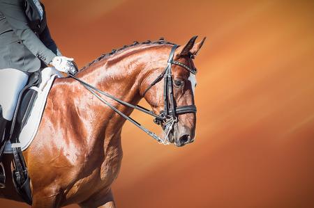 Photo pour Dressage bay horse and rider on on orange background - image libre de droit