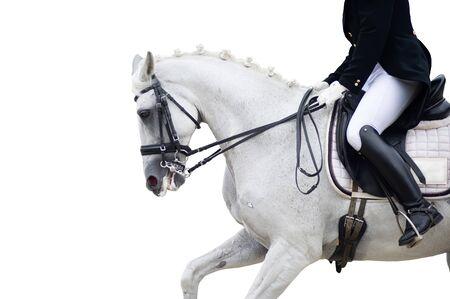 Photo pour Equestrian sport portrait - dressage head of sorrel horse - image libre de droit