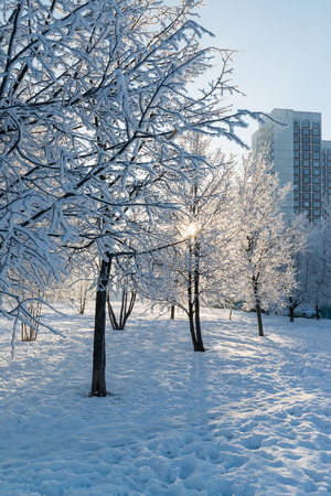 Snow-covered trees in the city of a  Moscow, Russia