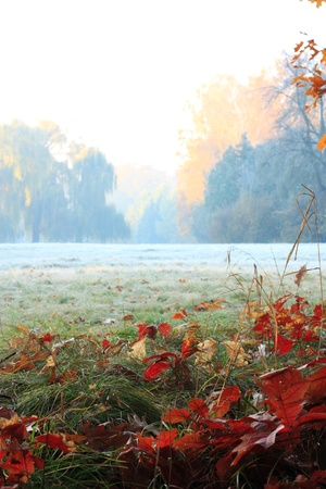 Misty leisurely awakening, meadow and forest