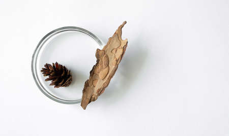 Foto de Pine cone and bark in glass petri dish on white background with copy space, top view. Concept science laboratory flat lay. Natural extract - Imagen libre de derechos