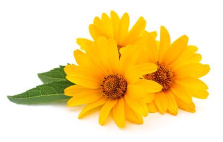 Photo pour Three yellow flowers on a white background. - image libre de droit