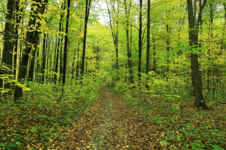 Path is in the autumn forest