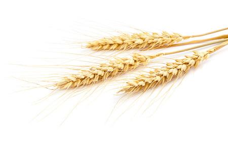 Foto für Sheaf of wheat ears isolated on white background. - Lizenzfreies Bild
