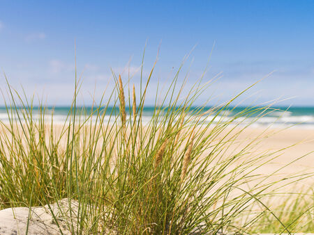 Grass in the dunes by the sea with blue sky