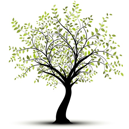 Green tree over white background