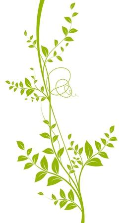 Ilustración de vector decorative element  Green liana with leaves over a white background - Imagen libre de derechos