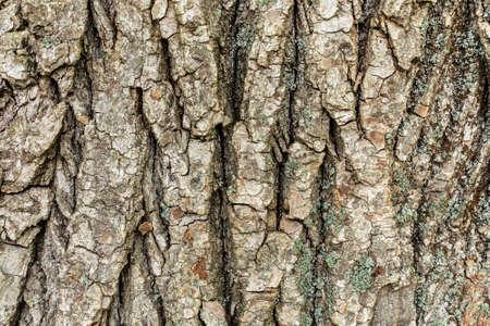 Foto de Embossed tree bark background. Tree bark texture. - Imagen libre de derechos