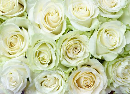 Photo for Background of delicate white roses for the wedding, for greeting cards, invitations, etc. - Royalty Free Image