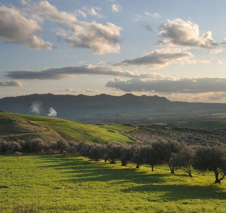 long shadows of a row of olive trees in a green valley at the twilight