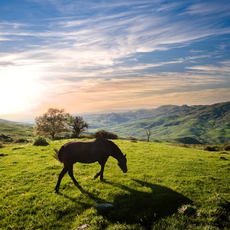 rural landscape at sunset with a horse grazing