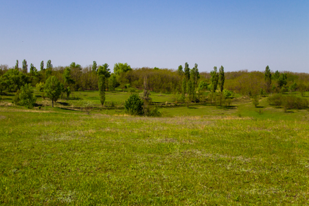 Spring landscape with green meadow and trees