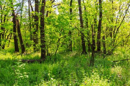 Photo pour View of green forest at spring - image libre de droit
