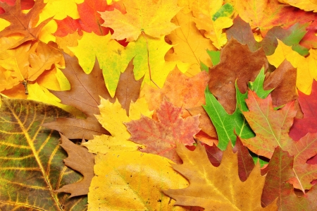 Beautiful, many colorful autumn leaves forming a backgroundの写真素材