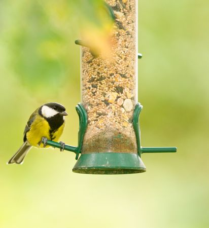 This colourfull Great Tit was photographed at a RSPB reserve in Wales, UK.