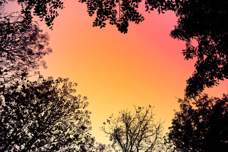 Backlit trees and branches in retro style for Abstract background.