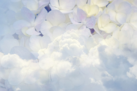 Floral background soft purple hydrangea flowers and sky vintage  soft color style