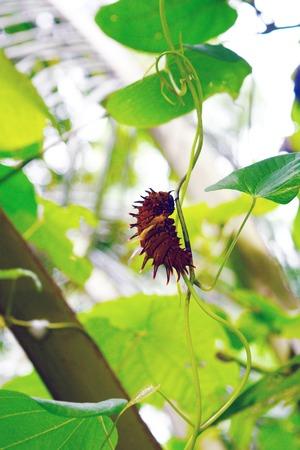 a slug on vine