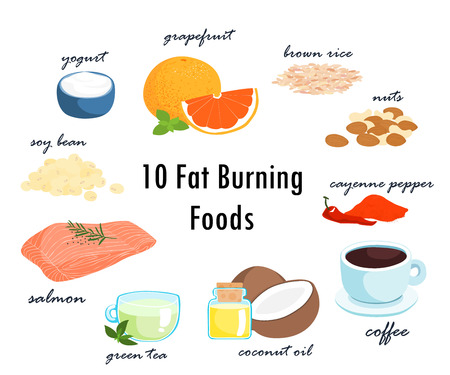 most foods can fat burning top ten item  vector illustration