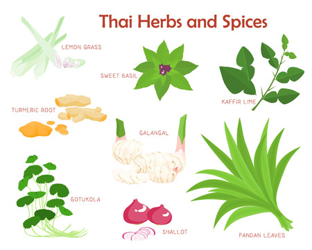 Illustration pour Thai herbs and spices aromatic vector illustration - image libre de droit