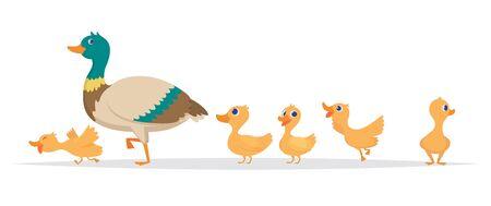 Illustration pour Mother duck. Row of wild ducks birds family walking vector cartoon collection. Duck mother, wild duckling illustration - image libre de droit