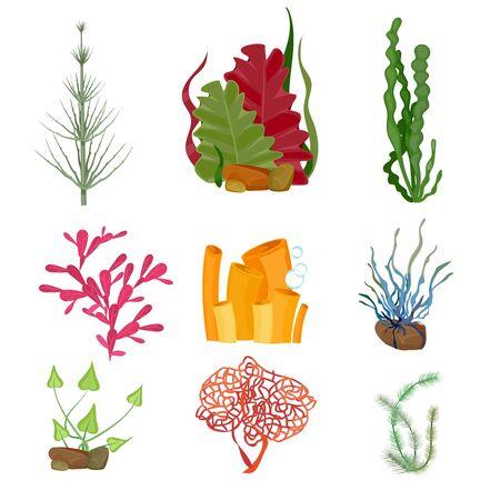 Illustration pour Seaweed. Underwater ocean or sea plants marine botanical wildlife cartoon set. Botanical underwater aquarium plant, wildlife seaweed illustration - image libre de droit